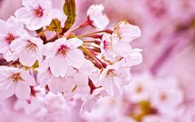 வால்பேப்பர்கள் ( flowers wallpapers ) 01 - Page 12 Images?q=tbn:ANd9GcS-x15H2aX5deupnuQbMLcBdRAgFjCBUY59g2Azm7O8HF8cAYR4