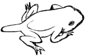 tadpole coloring page toad clipart etc
