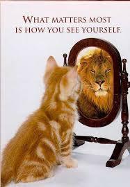 bias reflection -.-'