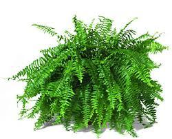Combattere l'inquinamento domestico con le piante Images?q=tbn:ANd9GcS13r2qf8tS70pi6jqjyxbHCnl7OlSXcglGrqR_GmcE5QsFc-fQ
