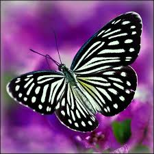 The    Strategy To Help You Finish Your Dissertation Finish Your Thesis thesis butterfly