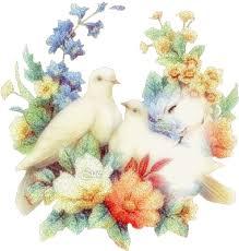 طيور الحب الساكنة images?q=tbn:ANd9GcS
