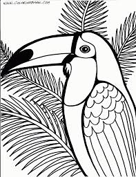 toucan coloring page printables pinterest bird