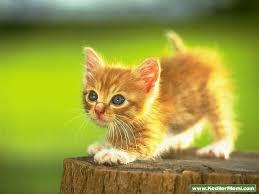 Rüyada Kedi Öldürmek
