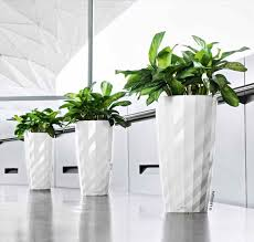 tall indoor plants statue of tall house plants for indoor the