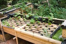 Backyard Aquaponics Grow X More Fruits And Vegetables - Backyard aquaponics system design