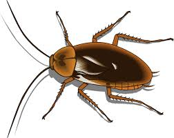 Pest Control Noida offers Cost Effective and Quality Solutions to Customers