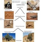 fennec fox food chain