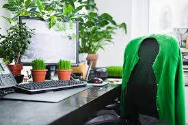 Office Desk Plants by Office Plants Boost Productivity By 15 Study Finds Time Com