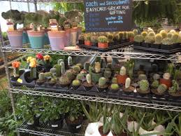 good earth greenhouse gardening plants river forest il