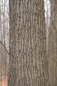 White Oak Bark Nature Center Plants