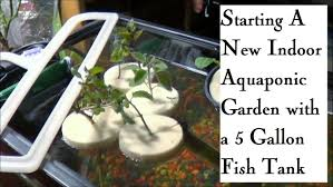 starting an indoor aquaponic garden in a 5 gallon fish tank youtube