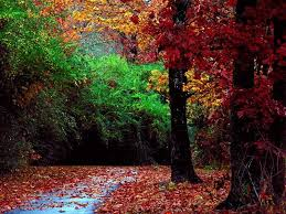 طبيعية،صور طبيعية خيالية،اجدد الطبيعة الخبالية،صورطبيعة