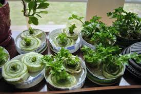 stop trashing your scraps 16 produce items to re grow at home