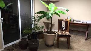 house plants best house plants 2017
