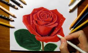 drawing rose colored pencils