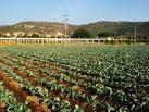 File:Agricultura Michoacán.jpg - Wikimedia Commons