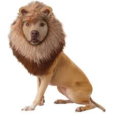 spirit halloween in las vegas animal planet lion dog costume buycostumes com