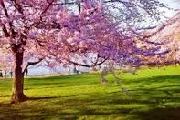 فصل الربيع Images?q=tbn:ANd9GcSAArqY-OSV-EnJyUzrL79QebnL42UxcJ2ZsYTwpuw1zGm2B4OWhD7Yxs-nZw