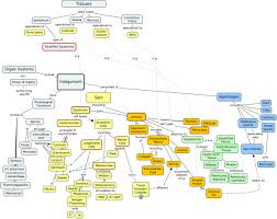 Concept Maps Concept Map Integumentary If You Need Help Turning Javascript On
