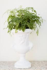 Best Office Desk Plants Pretty Indoor Plants You Can T Kill Low Maintenance Best Ideas