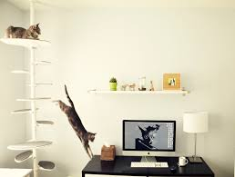 giggly cats cat friendly office meow