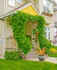 wonderful small flowering house plants best house design