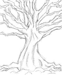 tree sketches drawing plants pinterest tree sketches sketch