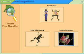 Virtual Frog Dissection Worksheet Answers   Intrepidpath Mr Goode    S Cl Archive Virtual Frog Dissection