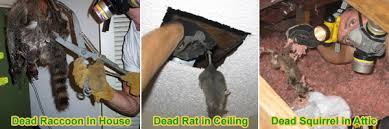 How Do You Get Rid Of Possums In The Backyard by Dead Animal Removal And Odor Control