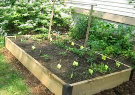 companion vegetable garden layout vegetable garden plans video and photos madlonsbigbear com