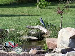 fish koi pond u0026 water garden installation lexington kentucky