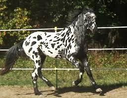 Udomi jednog od konja! - Page 3 Images?q=tbn:ANd9GcSD8_XomTOqvJUJBPY6VEtyxiP81mgQSrxxozd3qWU7He5OlAE4AA