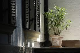 steps for bringing plants inside for winter