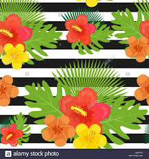 Flowers Plants by Tropical Flowers Plants Leaves And Black And White Stripes