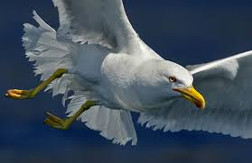 Fotografije raznih ptica Images?q=tbn:ANd9GcSFR_8xJdZh4b_i54feQib2AFt_Lzz_ecwzgDSNkUjTiTVdy55CFg&t=1