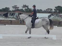 About Ben Liles and Team Liles Equestrian | Team Liles Equestrian - 22677_250403257446_8098215_n