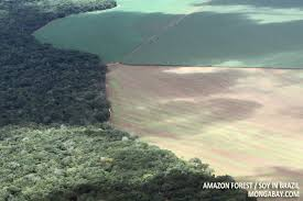 Amazon forest and soy in