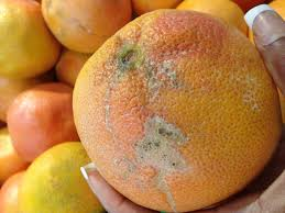 Image result for expired food