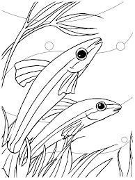 nice fish coloring sheet child coloring 4986 unknown