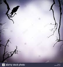 black and white halloween backgrounds halloween background with raven silhouette and free space for text