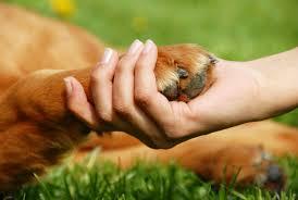 Animais abandonados são adotados em evento pioneiro no Recife ...