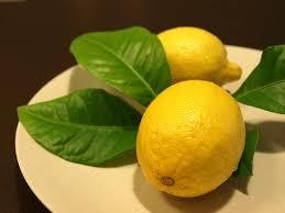فوائد استنشاق الليمون. معلومات جديدة images?q=tbn:ANd9GcS