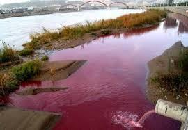 ساهموا في تنظيف مياهنا!!!!!!!!!!!!!!!!!!!!!!!!! images?q=tbn:ANd9GcS