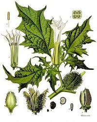 Glosario y propiedades mágicas de las plantas Images?q=tbn:ANd9GcSIVxPPMRQ7tkuAsn552fDAmapBIFS7vBZxdcTwRTvjX0ek_kA9NA