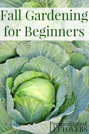 Manure For Vegetable Garden by Best 25 Vegetable Garden Tips Ideas On Pinterest Starting A