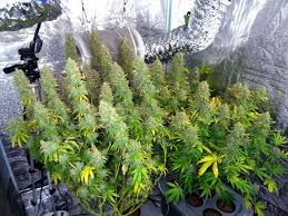 how to make the best growing environment grow weed easy