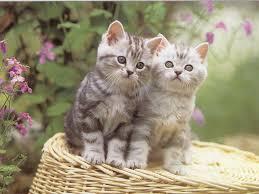 حبايبي القطط Images?q=tbn:ANd9GcSJ_GQmF9k343J-2PezXIRNg3ZQqfErVypXWoYIf3tH_FL6uyMHxg