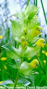 Flowers Plants by 3600 Best Unusual Plants U0026 Flowers Images On Pinterest Plants