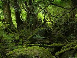 The Wild Woods Images?q=tbn:ANd9GcSLprLTWeKwn-c0rA4fHmgkqf5Odz_wPDjWBeWamvApOwWqs4bS3A